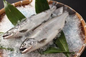 急速冷凍魚示意圖