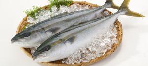 魚類冷凍測試示意圖