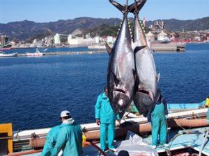 festival ikan tuna
