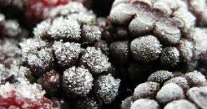 berries freezer burnt
