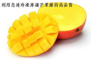 利用急速冷凍庫讓芒果維持高品質